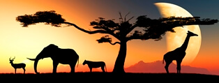 Stock photo of African plains with an antelope, elephant, zebra, tree, and giraffe